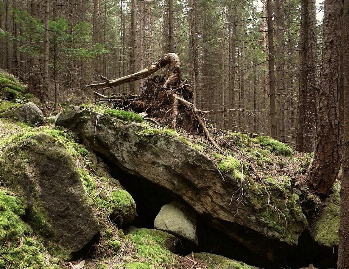 Будинкові і лісовики - реальність, в яку складно повірити, чи вигадка