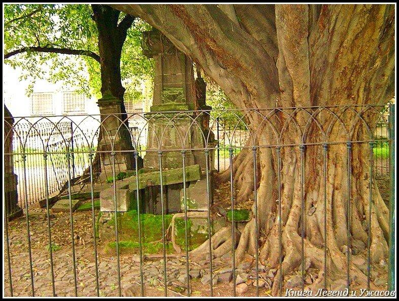 Дерево вампіра (Легенда)