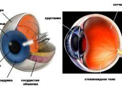 Руйнуємо міфи теорії Дарвіна. Міф №6: око занадто складний, щоб еволюціонувати