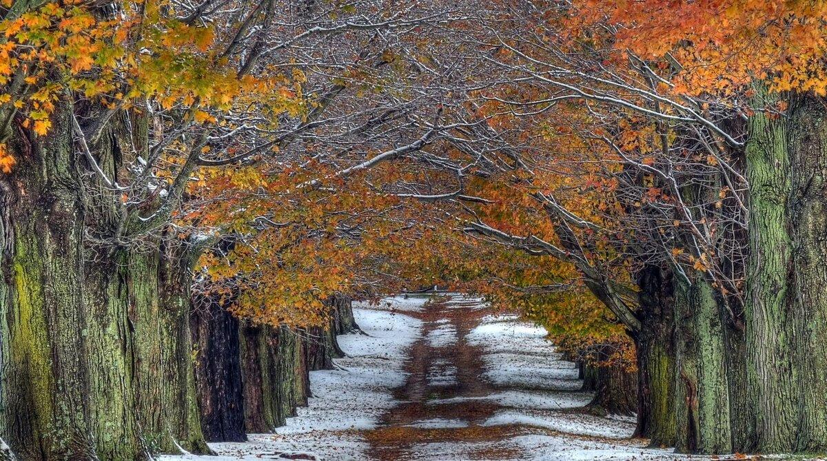 20 листопада-Федотов день. Народні прикмети