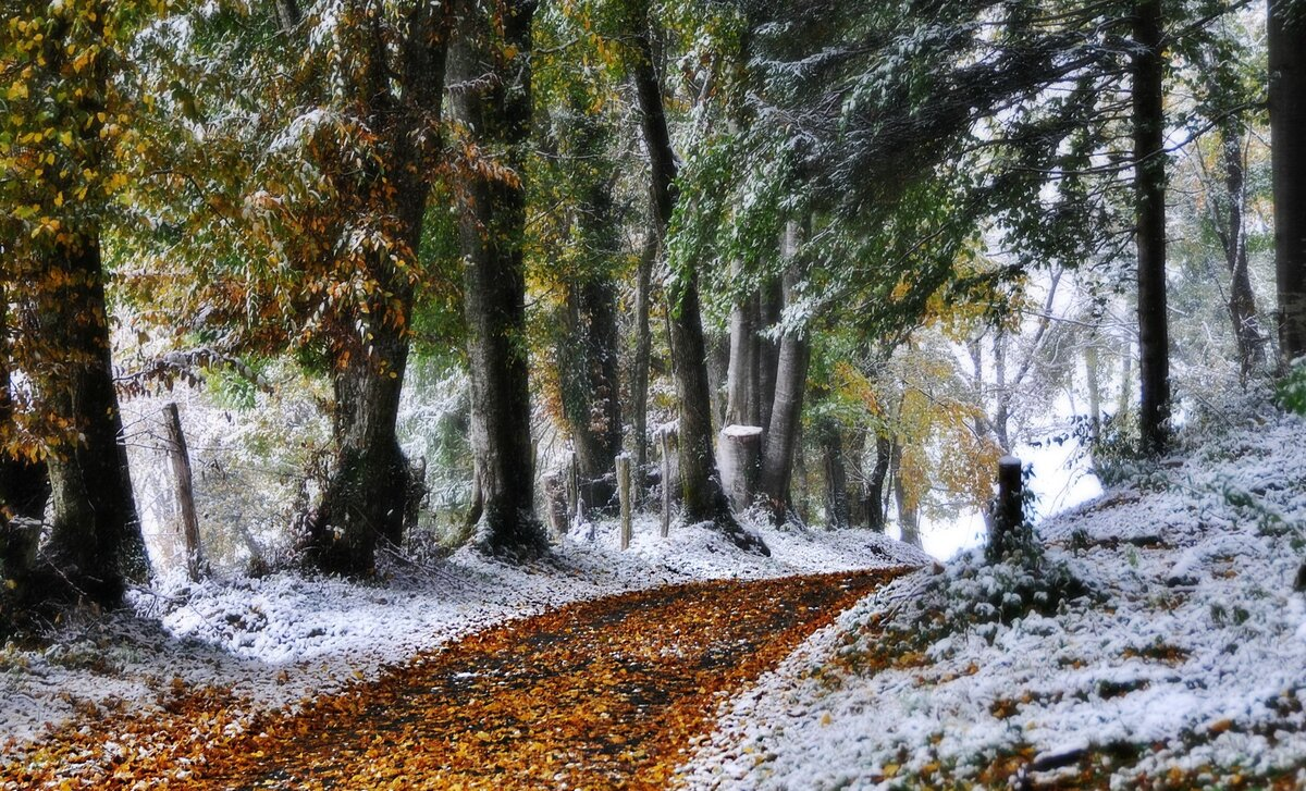 16 листопада - Ганна Холодна. Народні прикмети