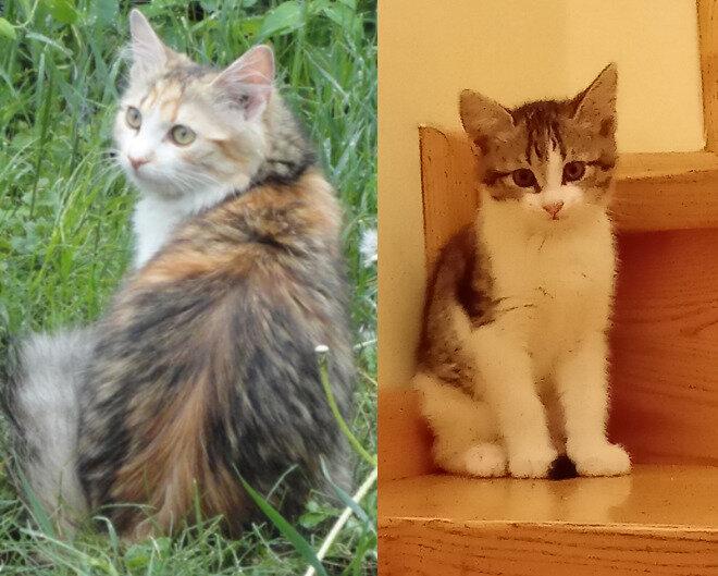 Містичне зникнення двох наших кішок