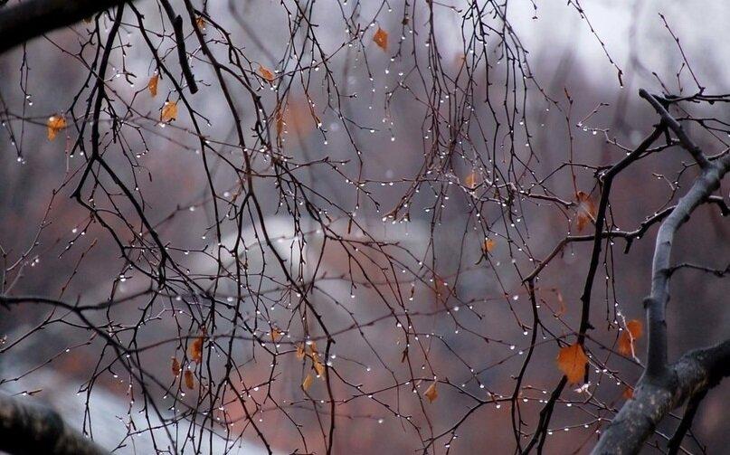 7 листопада - Дідівські плачі, Праведна Тавіфа. Народні прикмети