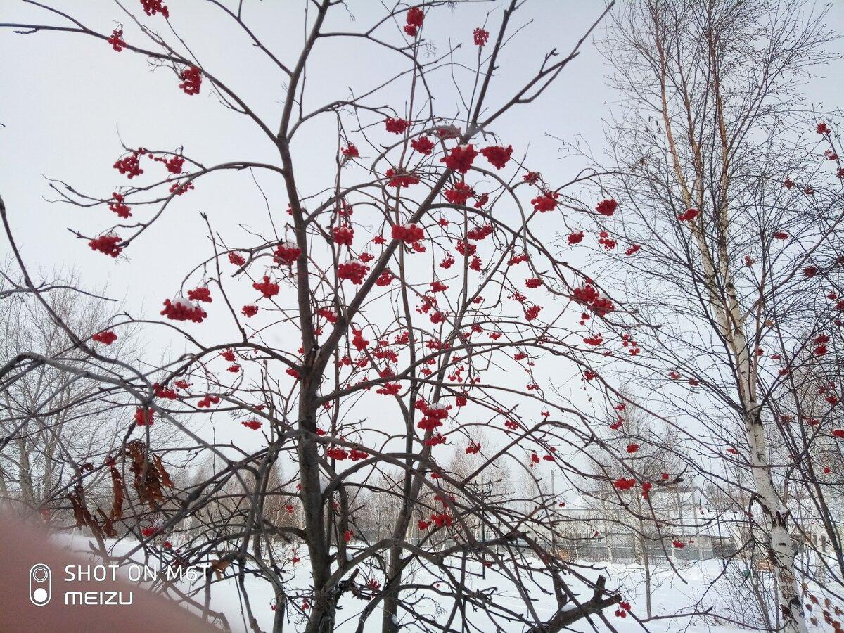 3 листопада погодуйте птахів - старовинне повір'я-заповіт. Заборона та прикмети дня