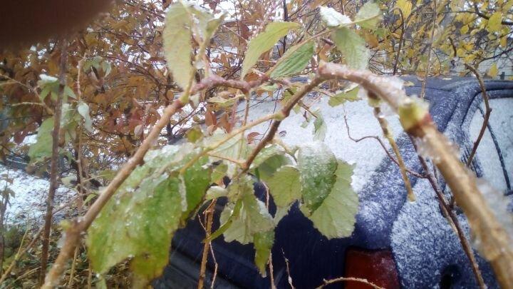 Зима наближається і всяка рослина і тварина готується до її приходу