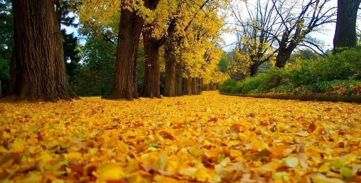 23 жовтня - Евлампий-зимоуказатель, Евлампий і Євлампія. Народні прикмети