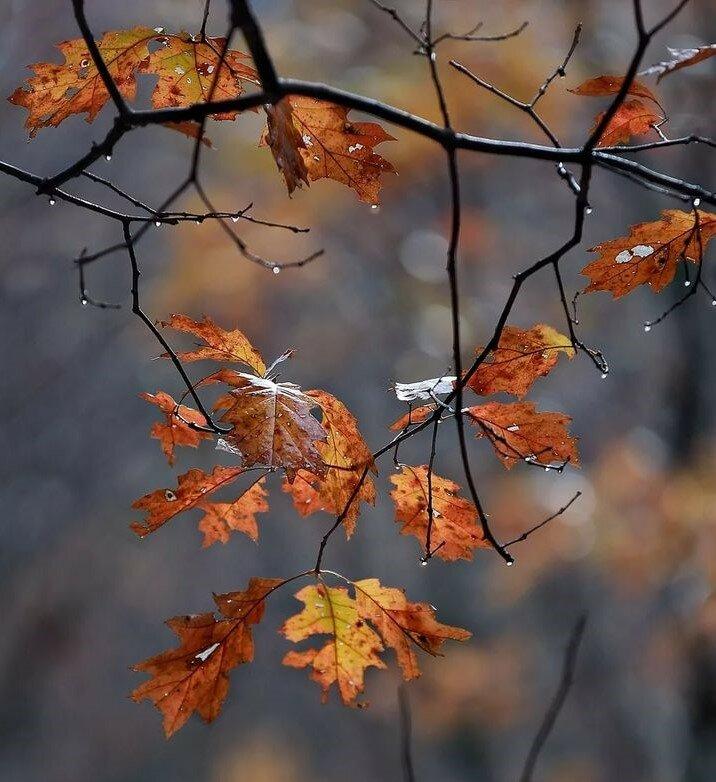 22 жовтня - Якова-деревопильця. Народні прикмети