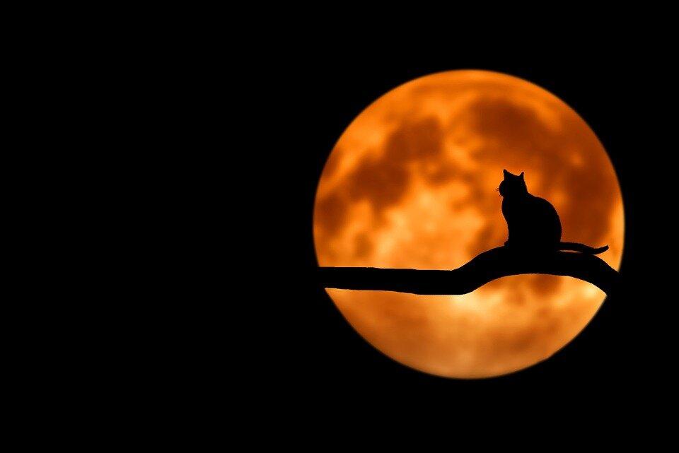 Місяць зводить сума людей - чому не можна довго дивитися на нічне светилище?