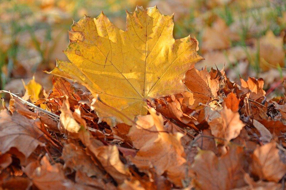 Народні прикмети на удачу і благополуччя 5-6 жовтня. Іоанна Предтечі
