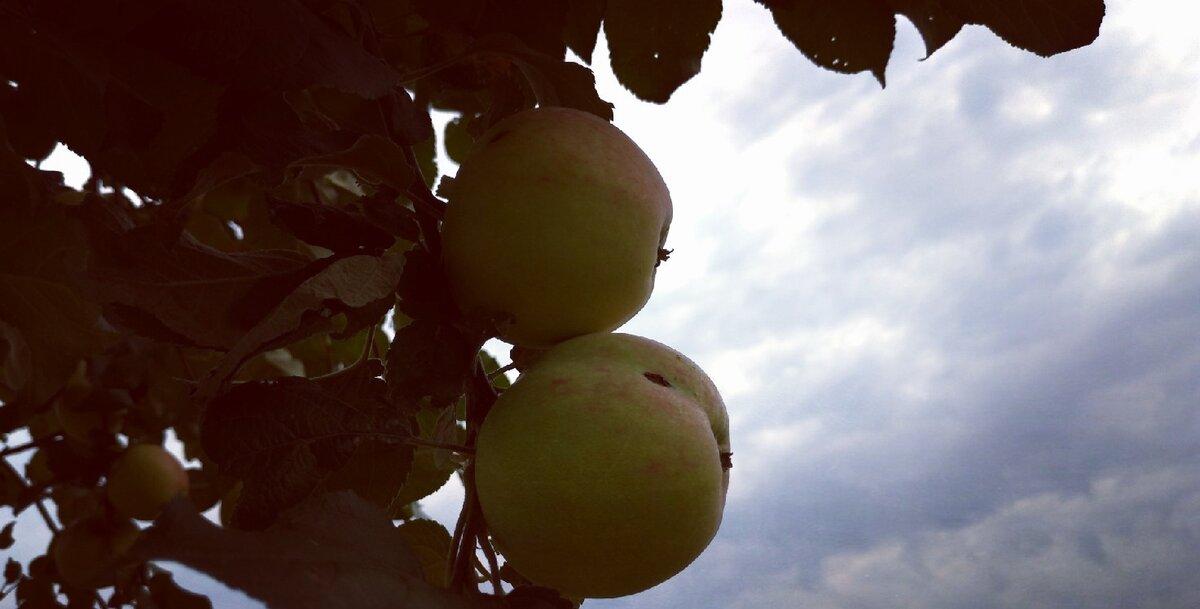 Народні прикмети на достаток, благополуччя й удачу в Яблучний Спас 19 серпня. Загадуємо бажання
