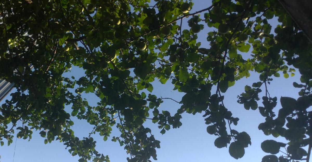 Народні прикмети на достаток і благополуччя в день Архангела Гавриїла 26 липня