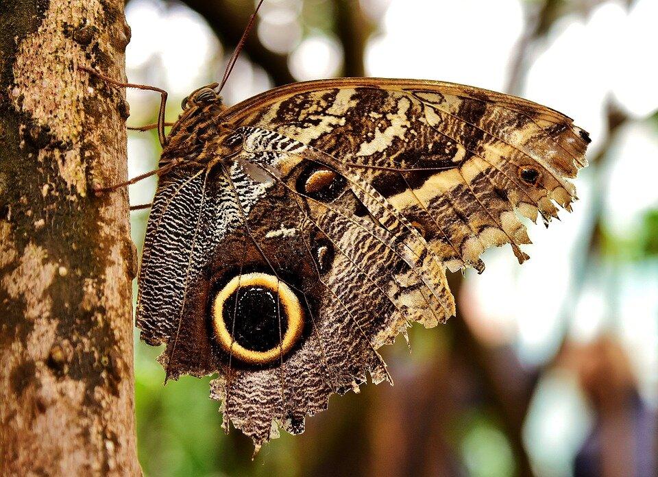 Якщо будинок залетів метелик, можливо, вона просто прийшла по вашу душу