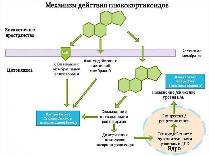 Адвантан - фармакологічна дія глюкокортікостероїдів