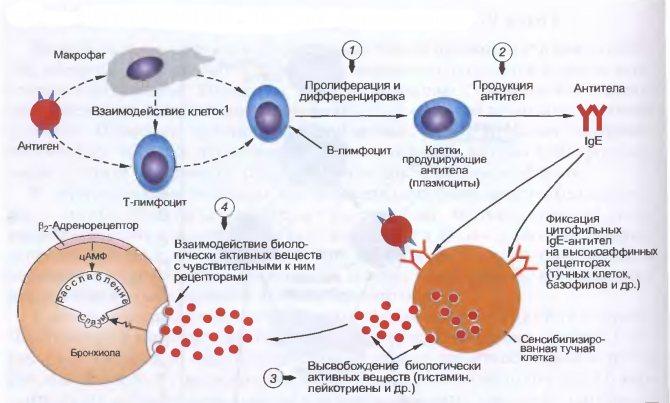 алергічній дерматит