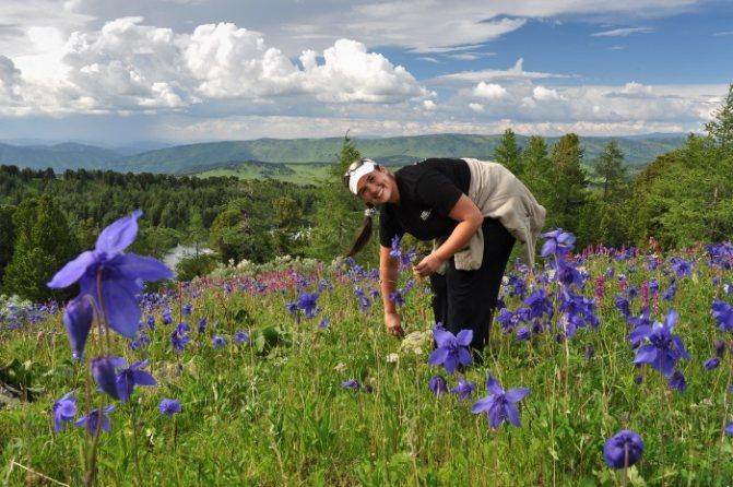 Алтей. Лікувальні властивості і рецепти застосування трави, кореня, сиропу. Протипоказання