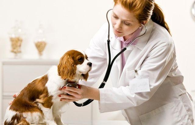 Амоксіцілін в ветерінарії