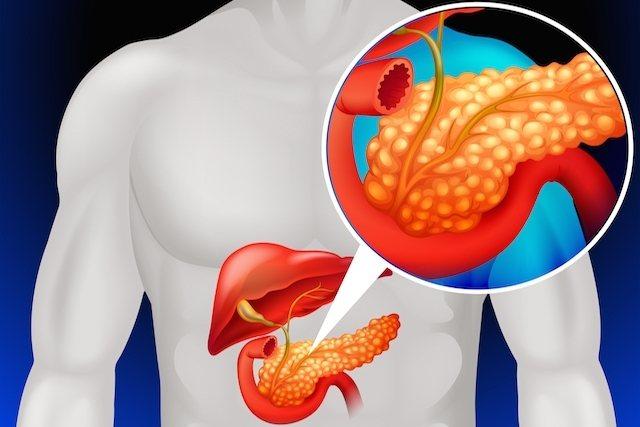 Анатомічне Розташування підшлункової