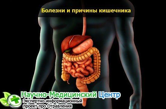 Анатомія, функції і захворювання кишечника людини