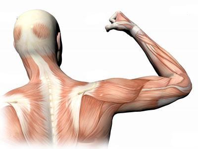 атрофія м'язів причини
