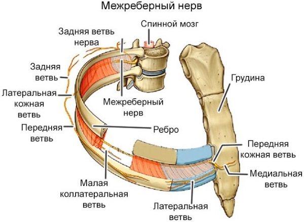 Біль під лівою грудиною у жінок спереду при диханні, русі, натисканні, після їди. Причини і що робити
