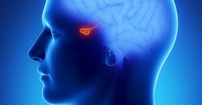 хвороби пов'язані з гіпофізом