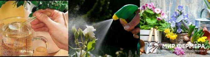 Борна кислота для кімнатних рослин
