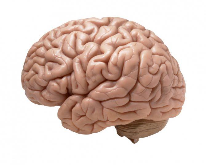 Людський мозок.