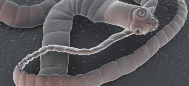 Що їдять глисти в організмі людини, и як розмножуються