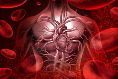 циркуляція крові
