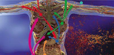 Циркуляція токсинів по організму