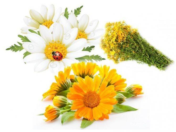 Квіти календули и ромашки