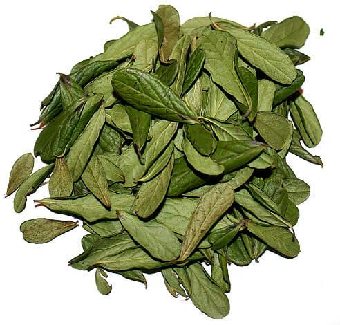 Для подрібнення і фасування в фільтр-пакети листя зазвичай висушуються сильніше і майже втрачають блиск.