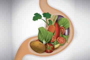 їжа в шлунку