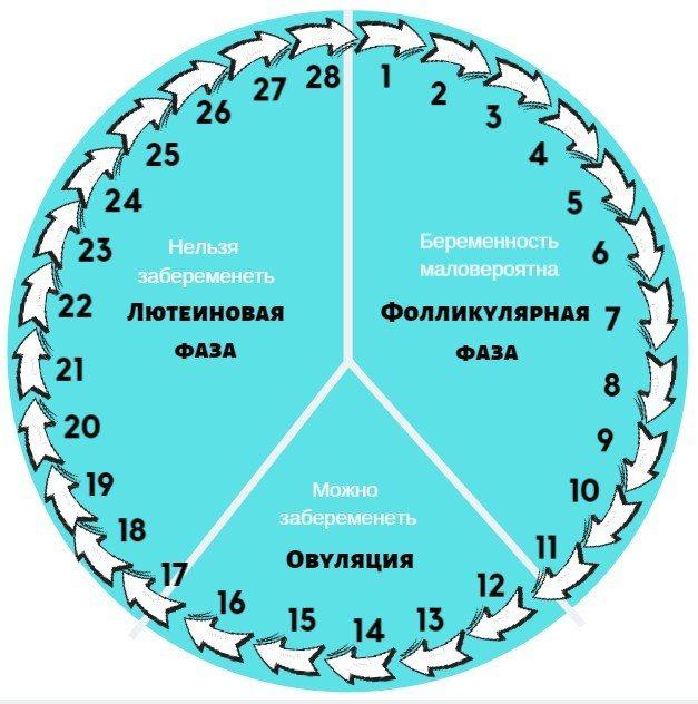 Фази менструального циклу по днях, схема