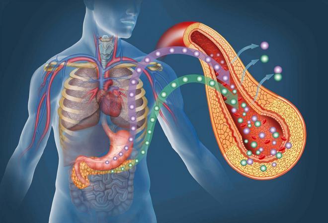 Ферменти підшлункової залози: види, функції, ознаки браку