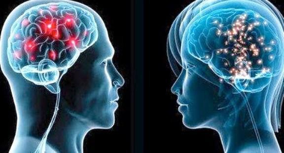 функції відділів головного мозку людини