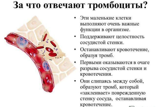 функції тромбоцитів