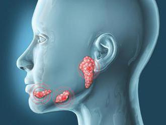де знаходяться слинні залози в роті
