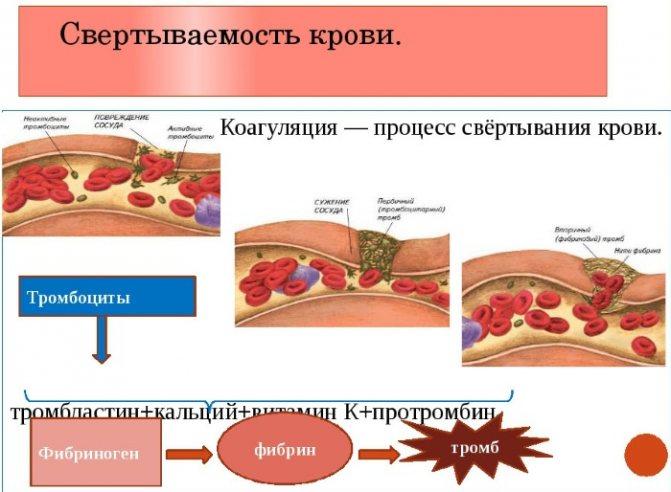 Гемостазіограмма. Що це таке при вагітності, в чому різниця з коагулограма, розшифровка показників