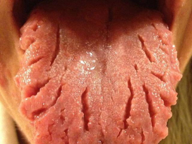 географічний язик