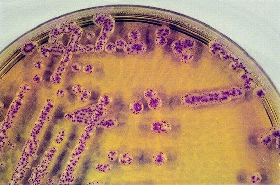 гриби кандида