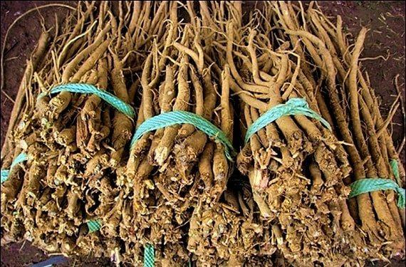 Як зберігати лікарські коріння рослин