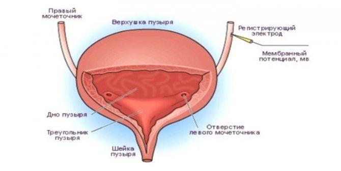 Як здійснюється контроль сечовипускання