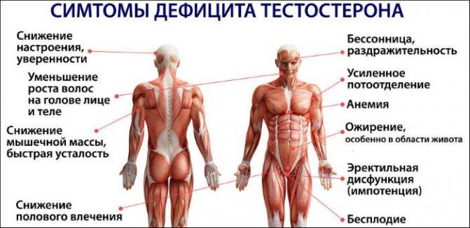 Як підвищити тестостерон у чоловіків природними способами, народними засобами, препарати в аптеці, норма гормону в залежності від віку