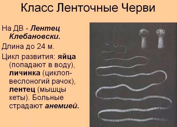 Як виглядають глисти у людини фото, які бувають паразити