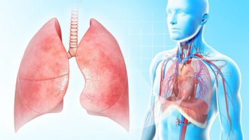 Які частки легких вражає полісегментарна пневмонія?