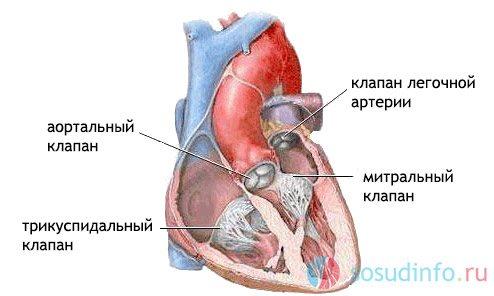 клапани серця
