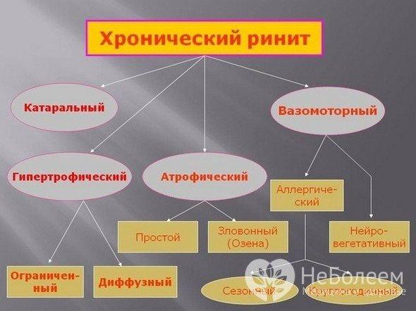Класифікація хронічного риніту