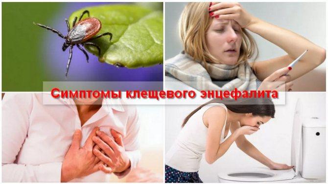 кліщовій Енцефаліт Симптоми