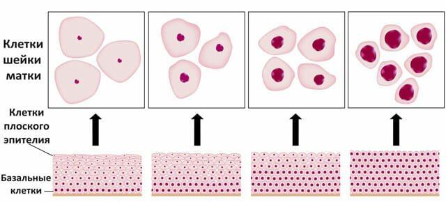 Клітини епітелію